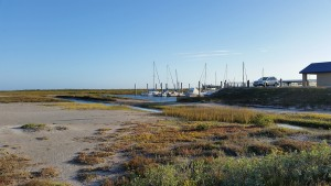 Cove-Harbor-Sanctuary-Wetlands-Birding-9