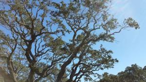Big-Tree-10