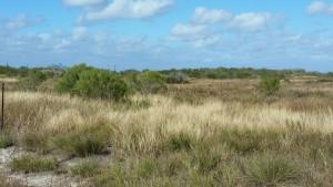 Cape-Valero-Birding-10
