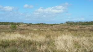 Cape-Valero-Birding-11