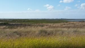 Cape-Valero-Birding-13