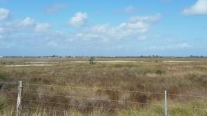 Cape-Valero-Birding-14
