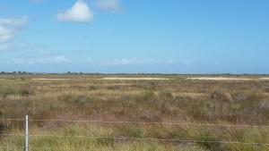 Cape-Valero-Birding-16