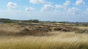 Cape-Valero-Birding-18