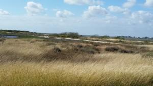 Cape-Valero-Birding-19