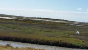 Cape-Valero-Birding-23