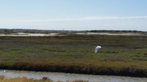 Cape-Valero-Birding-24