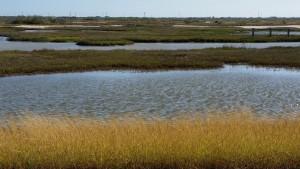 Cape-Valero-Birding-25