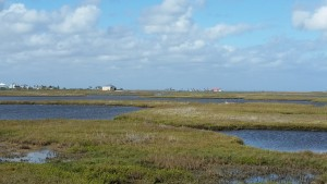 Cape-Valero-Birding-26