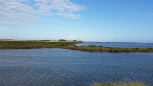 Cove-Harbor-Birding-1