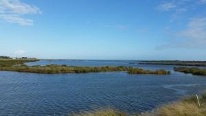 Cove-Harbor-Birding-2