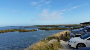 Cove-Harbor-Birding-3