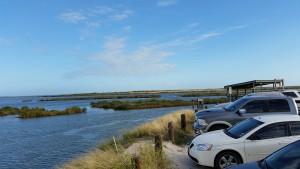 Cove-Harbor-Birding-5