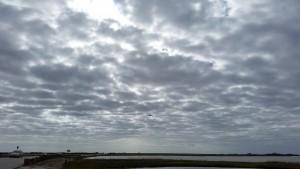 Egery-Flats-Birding-13