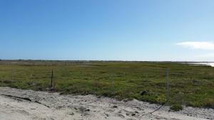Port-Bay-Birding-10-