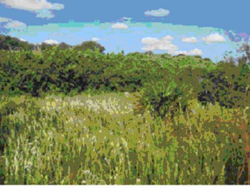 Rockport Demo Bird Garden and Wetlands (Tule East)