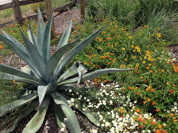 Linda S. Castro Nature Sanctuary