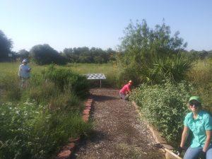 Volunteers Needed November 20-21, 2020 to Help Restore Aransas Pathways Gardens