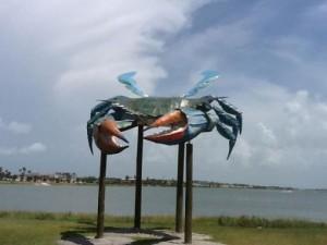 crab-5